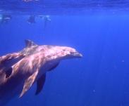 ou-faire-du-snorkeling-guadeloupe