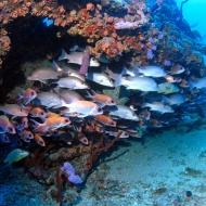 Rhone-banc-de-poissons
